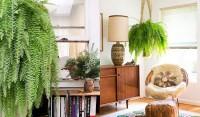 Saiba quais são os tipos de plantas que se adequam melhor aos ambientes internos