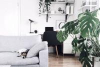 Plantas na quarentena: uma ótima opção para desestressar e energizar a casa
