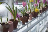 Cultive as plantas certas em seu apartamento